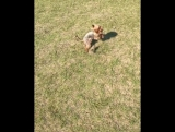 Боевой суслик и собачка