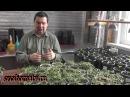 Тонкости выращивания рассады томатов перцев и баклажан
