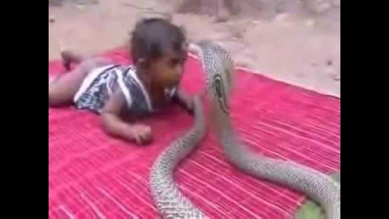 Ребенок играет с коброй
