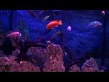 Подводный мир Relax красивое видео и музыка