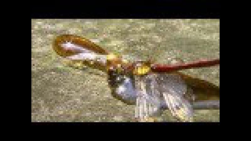 Небесные охотники Мир стрекоз