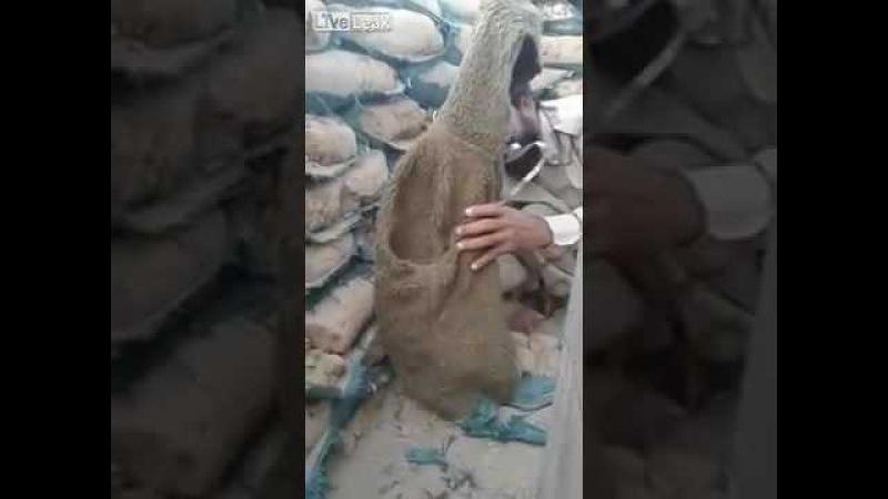 Иракцы издеваются над снайпером