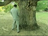borat paying respect to the oldest tree in US&ampA