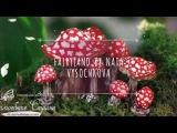 Fairyland by Nata Vysochkova