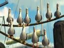 В поисках Немо, сцена с чайками, дай..дай