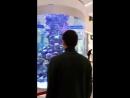 Astana 2017 MeGa-SiLkWay🐠