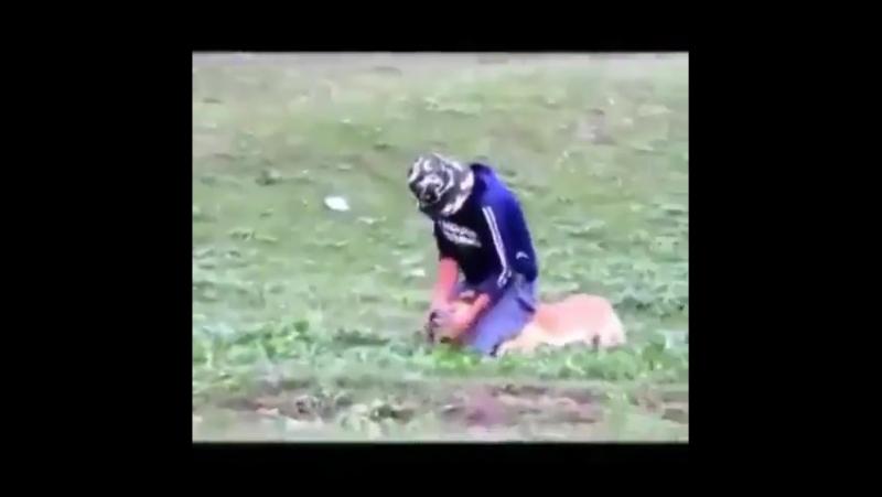 вот он псих против очень злой собаки