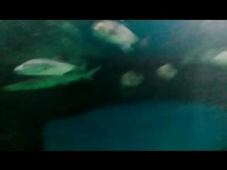 Океанариум в Астане!)))