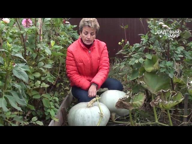 Как выращивать тыкву. Сайт Садовый мир
