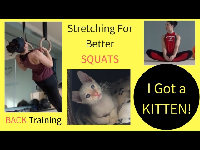 I Got A Kitten! | Stretching For Better Squats | Back Training