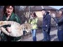 РЕАКЦИЯ ПРОХОЖИХ НА РЫСЬ. Прогулка с большой кошкой Ханной по улице