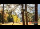 Ошо - Методики из Книги Тайн. 5ч. Управление Сновидениями.(320 кбит/с - Объем.звук)(РА...