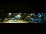 3D объемный фон для аквариума -1