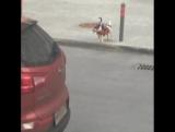 Милая собачка с человечком бегает по Одинцово