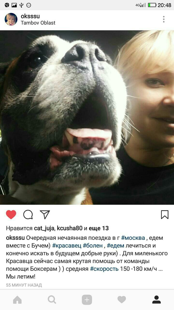 Москва, Эдгар, кобель 6 лет DuZNXaE9csY