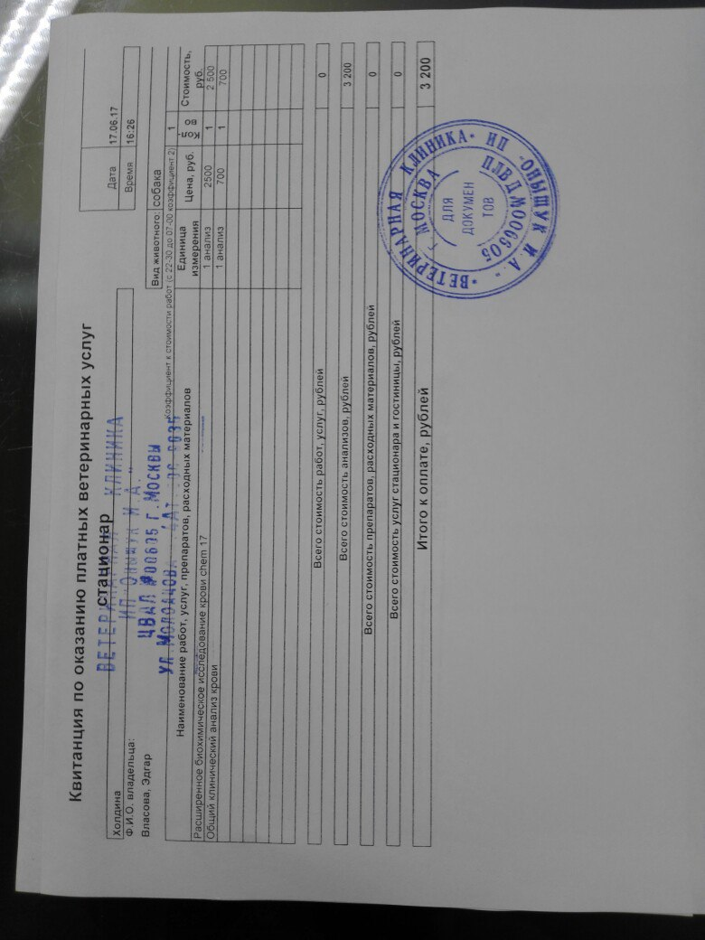 Москва, Эдгар, кобель 6 лет TPeoshHkXDU