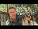 Дикая жизнь с Тимом Фолкнером The Wild Life of Tim Faulkner 2013 11