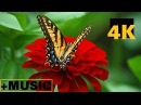 Flowers and Insects in 4K Video with Comfortable Theme Relaxing Music