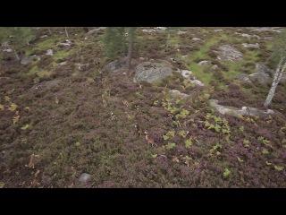 Охота с гончими в Европе... La Grande Meute-HD