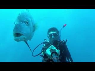 Diving with Tuna, Koh Chang, Go Pro HD » Freewka.com - Смотреть онлайн в хорощем качестве