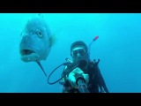 Diving with Tuna, Koh Chang, Go Pro HD
