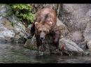 Классный фильм Дикая жизнь Аляски Первозданная природа Документальный фильм