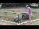 Ксения Бородина с черепахами на Сейшелах