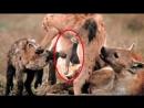 Ужасные Спаривания Животных в сравнении с Человеком