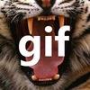 Animal Gif   Гифки про животных