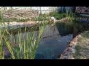 Сделать простой искусственный пруд водоем на участке строительство опыт 2 года
