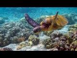Подводный мир. Морские глубины. Кораллы. Документальный фильм.