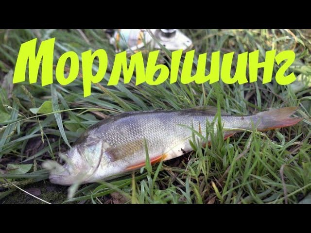 Мормышинг. Летняя мормышка. Рыбы пойманные на мормышку спиннингом.