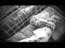 Первоапрельский розыгрыш родила 10 детей