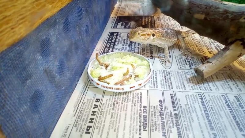 агамыч ест