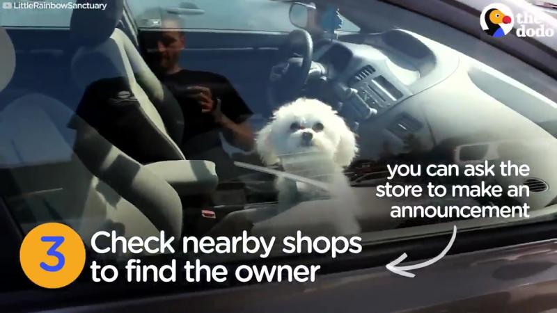 Как это решается в Америке: Спасение собак из нагревших автомобилей