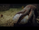 BBC: Жизнь / BBC: Life (2009) BDRip 720p - (8 серия - Подводный мир)