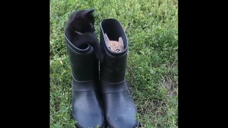 Cutie kitty