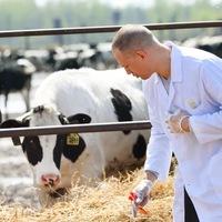 Дипломы курсовые по Ветеринарии ВКонтакте Дипломы курсовые по Ветеринарии