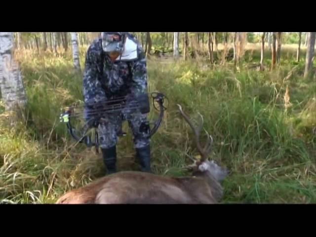 Охота из луком на оленя равным образом кабана.