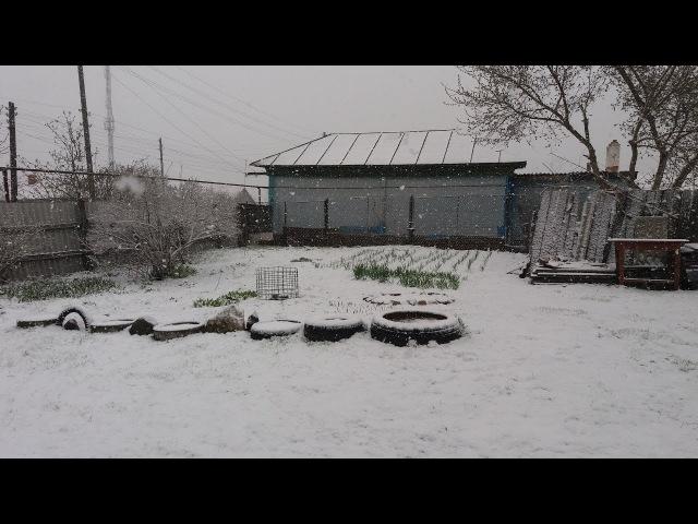 Апрельский снегопад в Самойловке Саратовская область