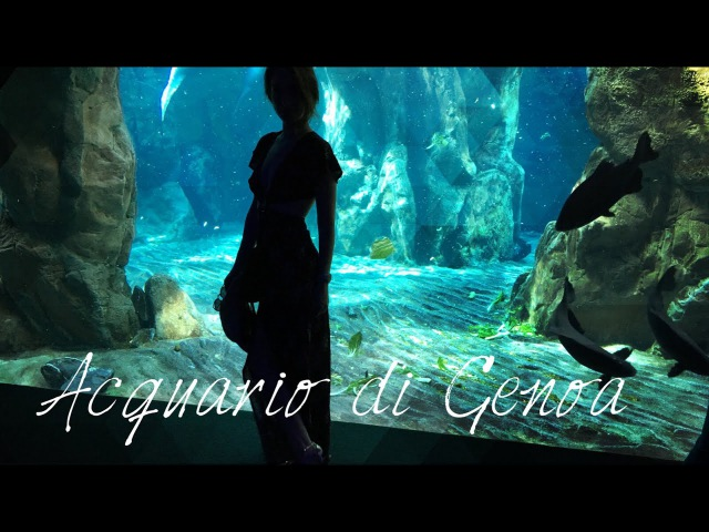 ПИНГВИНЫ ИЗ МАДАГАСКАРА   АКУЛЫ   Acquario di Genova