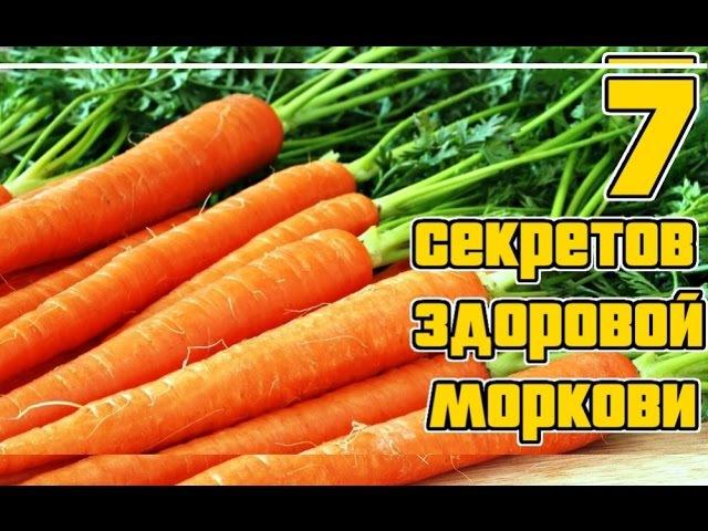 Морковь. Основные секреты выращивания Семь правил богатого урожая моркиви