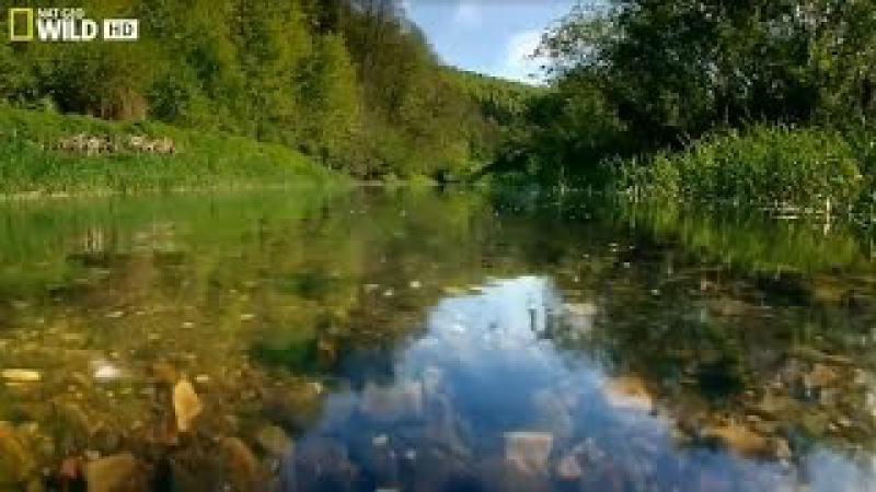 National Geographic. Дунай. Европейская Амазонка. Документальный фильм. » Freewka.com - Смотреть онлайн в хорощем качестве