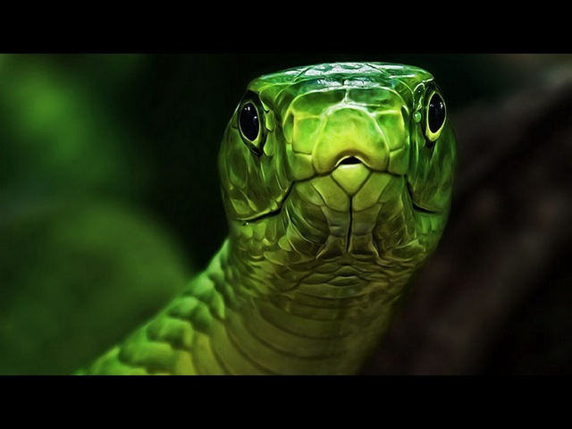 Красота Змей в мельчайших деталях (жизнь, охота, спаривание).Документальный филь...