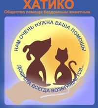 Приют красноярск для котов