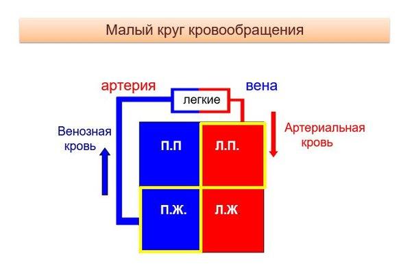 Фото №456247479 со страницы Ульяны Берг