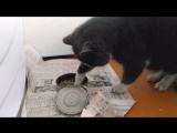 Кот аристократ