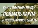 Рыбалка в Подмосковье на карпа Как поймать на поплавок карпа на платном пруду