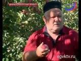 Самые разнообразные сорта яблок выращивают в садах с  Параул Карабудахкентского