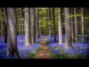 БЕТХОВЕН - Классическая Музыка для Расслабления и Отдыха - Музыка и Шум Дождя
